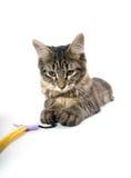 Cute kitten in slde Royalty Free Stock Images