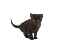 Cute kitten in slde Royalty Free Stock Photography