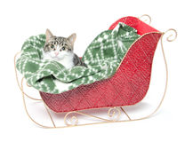 Cute kitten in sled Stock Photography