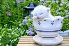 Cute Kitten Slee Stock Photo