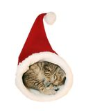 Cute kitten sleeping. In the Santa's cap stock photography