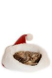 Cute kitten sleeping. In the Santa's cap royalty free stock photography