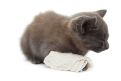 Cute kitten sleeping with a bandage on its paw Stock Photo