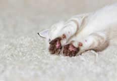 Cute kitten is sleeping. On a fluffy carpet Stock Photos