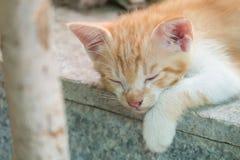 Cute Kitten Sleeping on Marble Floor Royalty Free Stock Photos