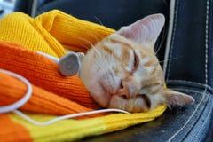 Cute kitten sleeping sweet dream with earpiece Stock Photo