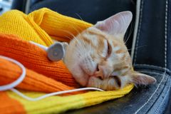 Cute kitten sleeping sweet dream with earpiece. Listening song technology pet lovely stock photo