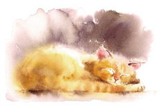 Cute Kitten Sleeping Watercolor Pet Cat Portrait Illustration Hand Painted Stock Photography
