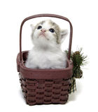Cute kitten in a small basket Royalty Free Stock Photos