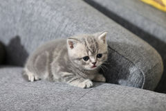 Cute kitten Stock Images