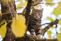 Cute kitten stands in a lime tree Stock Image