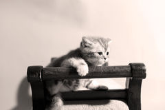 Cute kitten on a stool Stock Images