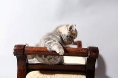 Cute kitten on a stool Stock Photos