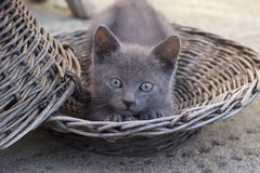 Cute Kitten Streching in the basket Stock Photos