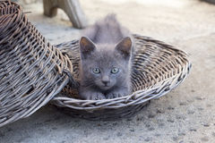 Cute Kitten Stretching in the basket Royalty Free Stock Photos