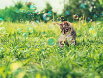 Cute kitten on summer grass royalty free stock photography