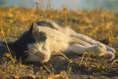 Cute kitten at sunrays Stock Photos