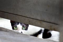 Cute kitten. Super cute cats with innocent eyes Stock Photo
