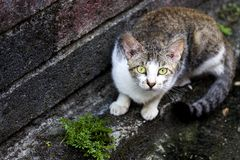 Cute kitten. Super cute cats with innocent eyes Royalty Free Stock Photos