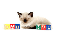 Cute kitten taking a nap Stock Photo
