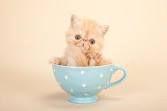 Cute kitten in tea pot stock images