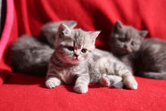 Cute kitten Royalty Free Stock Photography