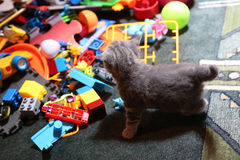 Cute kitten among toys Royalty Free Stock Image
