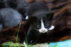 Cute kitten tries to make the first steps on the grass. Stock Photos