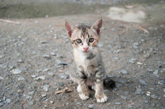 Cute kitten two months old. Stock Photo
