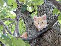 Cute kitten up in tree relaxing Stock Photo