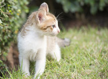 Cute kitten walk in garden Royalty Free Stock Photo