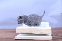 Cute kitten walks on a book Royalty Free Stock Images
