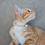 Cute kitten wear necklace. Cat face. Playful eyes. Royalty Free Stock Photography