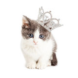 Cute Kitten Wearing Princess Crown. Cute little five week old kitten wearing a rhinestone princess crown Stock Photography