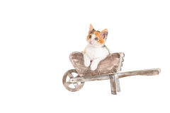 Cute kitten in a wheelbarrow stock photos