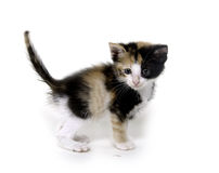 Cute kitten on white Royalty Free Stock Images
