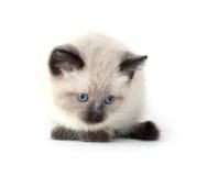 Cute kitten on white background Royalty Free Stock Photo