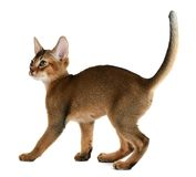 Cute kitten  on white background Royalty Free Stock Images