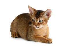 Cute kitten  on white background Stock Image