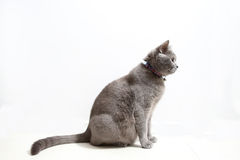 Cute kitten on a white background Stock Images