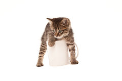 Cute kitten in white cup isolated on white Royalty Free Stock Photography