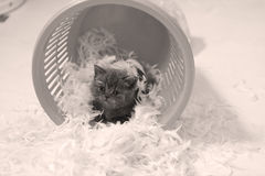 Cute kitten and white feathers Royalty Free Stock Images