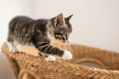 Cute kitten on wicker armchair. Stock Image