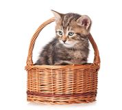 Cute kitten. In a wicker basket isolated on white background Royalty Free Stock Photography