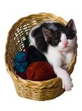 Cute Kitten In Wicker Basket, White Background. Cute small kitten is in a wicker basket and looking at the camera. Photo is isolated on white background Royalty Free Stock Images