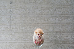 Cute Kitten in Wine Glass with textured background Stock Image