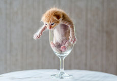 Cute Kitten in Wine Glass with textured background Stock Photography