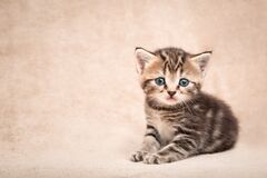 Free Cute Kitten With Innocent Eyes Lying On A Beige Bedspread With Copy Space Royalty Free Stock Photos - 189672198
