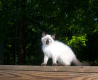 Cute kitten on wooden railing Royalty Free Stock Images