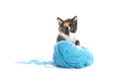 Cute kitten with wool Royalty Free Stock Photo